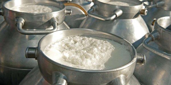 I formaggi Pedranzini e la lavorazione a latte crudo